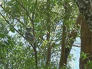 Gold Coast Hinterland Rainforest Retreat For Sale